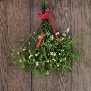 Christmas mistletoe plant with berries tied in a bunch with a red bow over oak background.